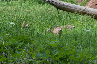 20140626Giant Forest-27962921