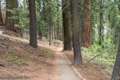 20140626Giant Forest-27962906