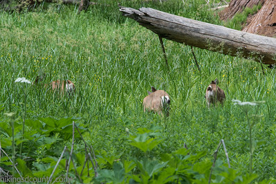 20140626Giant Forest-27962918
