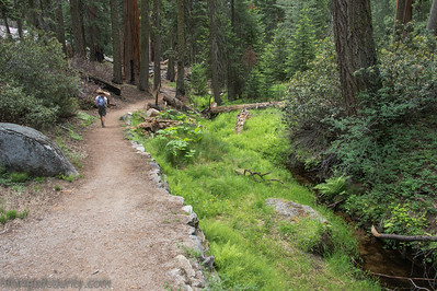 20140626Giant Forest-27962909
