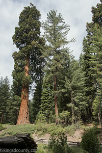 20140626Giant Forest-27962904