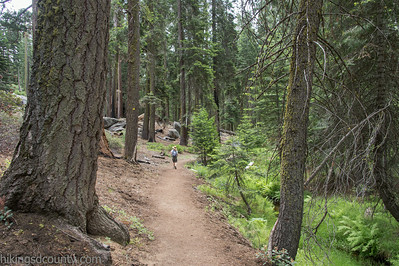 20140626Giant Forest-27962911