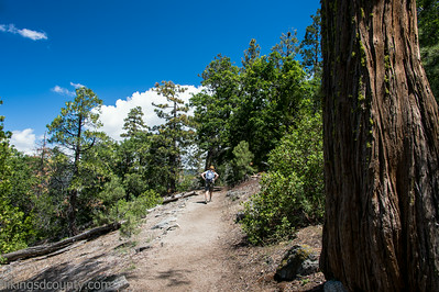20140626Giant Forest-3053