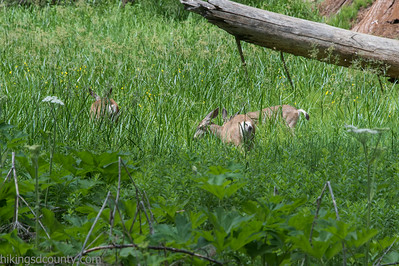 20140626Giant Forest-27962920