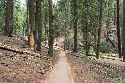 20140626Giant Forest-27962907