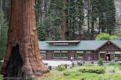 20140626Giant Forest-27962873