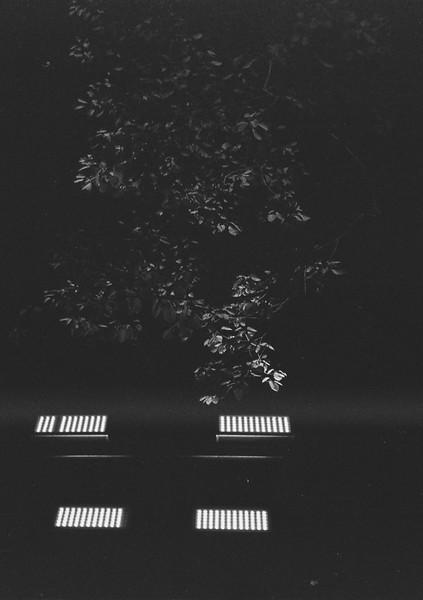 樹 影 燈