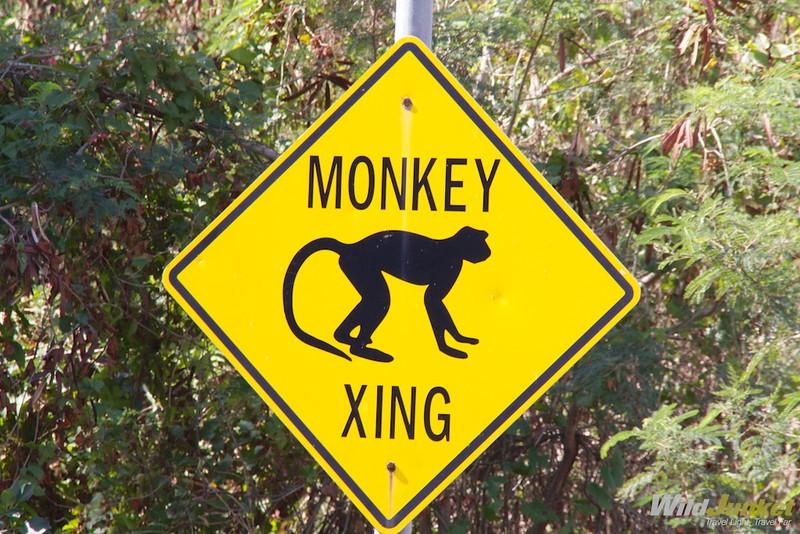Monkeys crossing