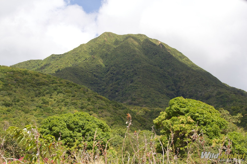 Mount Nevis in the distance