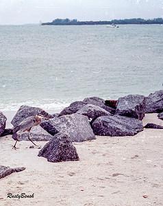 Boca Grande beach-2