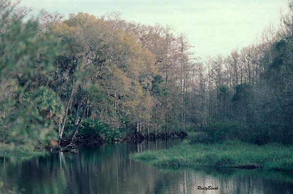 Fisheating Creek NOV88 (18)