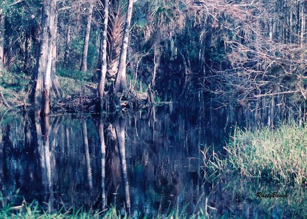 Fisheating Creek NOV88 (20)