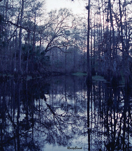 Fisheating Creek NOV88