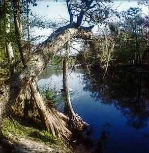 Creek Camp-B