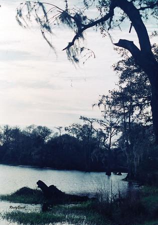 Fisheating Creek NOV88 (17)