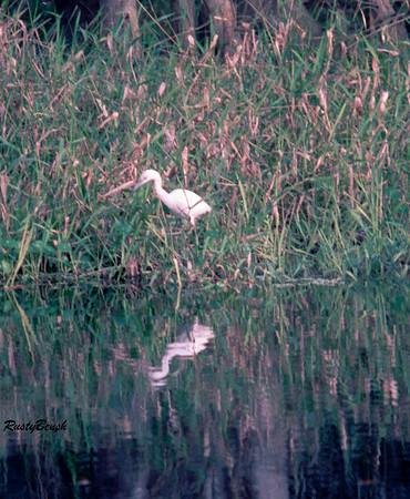 Fisheating Creek NOV88 (3)