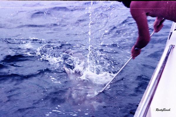 gaffing catch