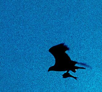 flight with fish