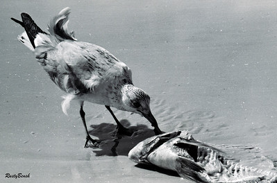 fish dinner (3)