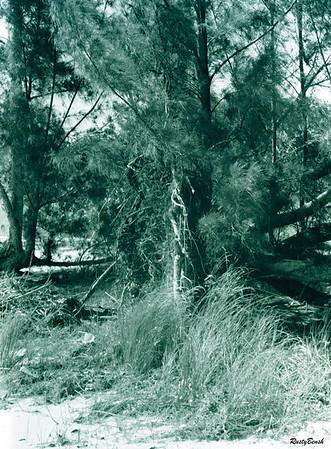 beach tree line