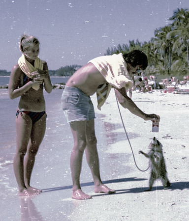 beach coon copy