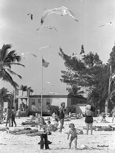 Sanibel beach-goers & gulls