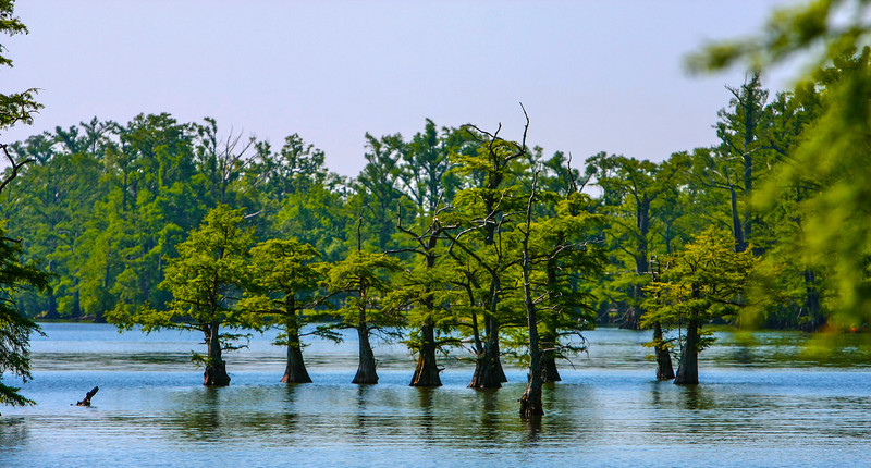 cypress-4