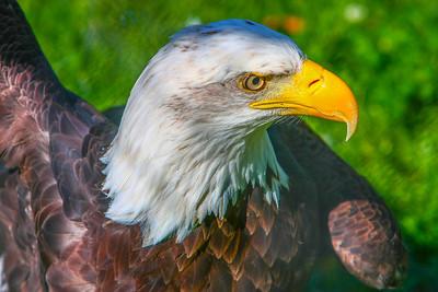 Eagle 1-2