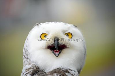 Owlface 2013