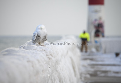 Arctic Export 2013