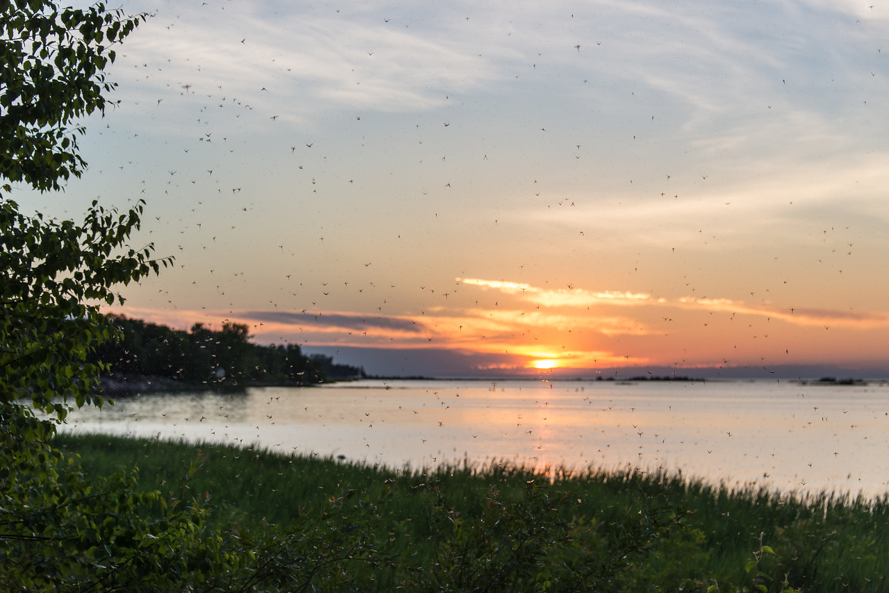 View of the Fish Flies off of the Short Point - Grindstone City, MI - June 2014