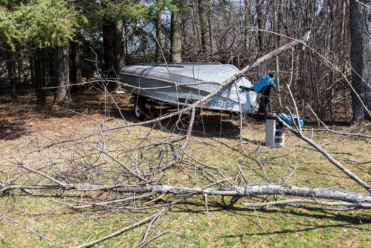 Fallen tree on Dad's boat - April 2014
