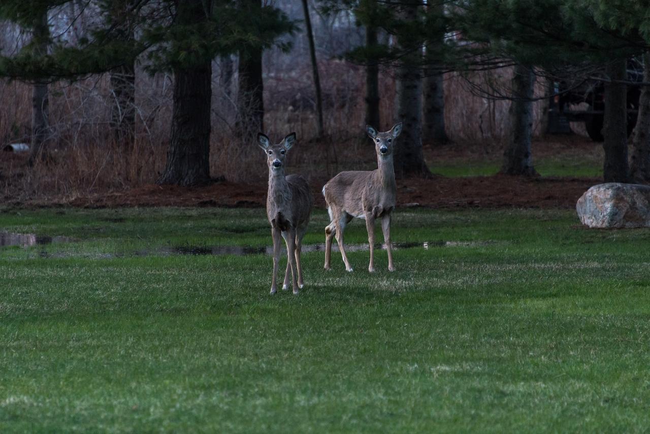 Backyard visitors - April 2014