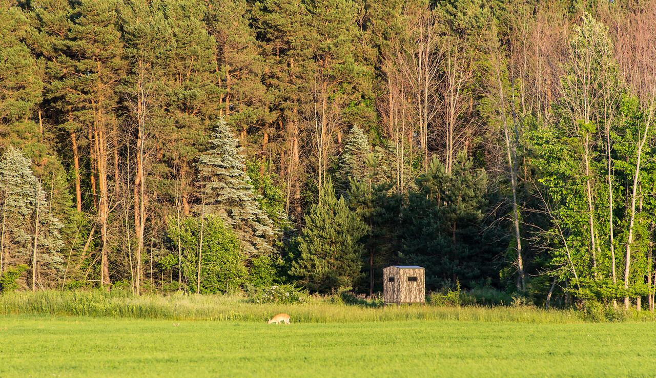Deer blind on Wallace Road, June 2014