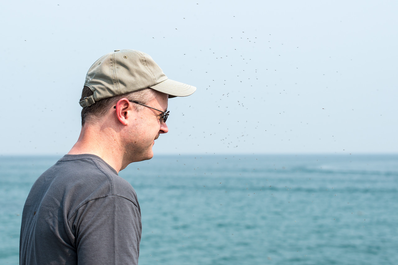 Eric with some hovering friends - Port Austin Breakwall, July 2015