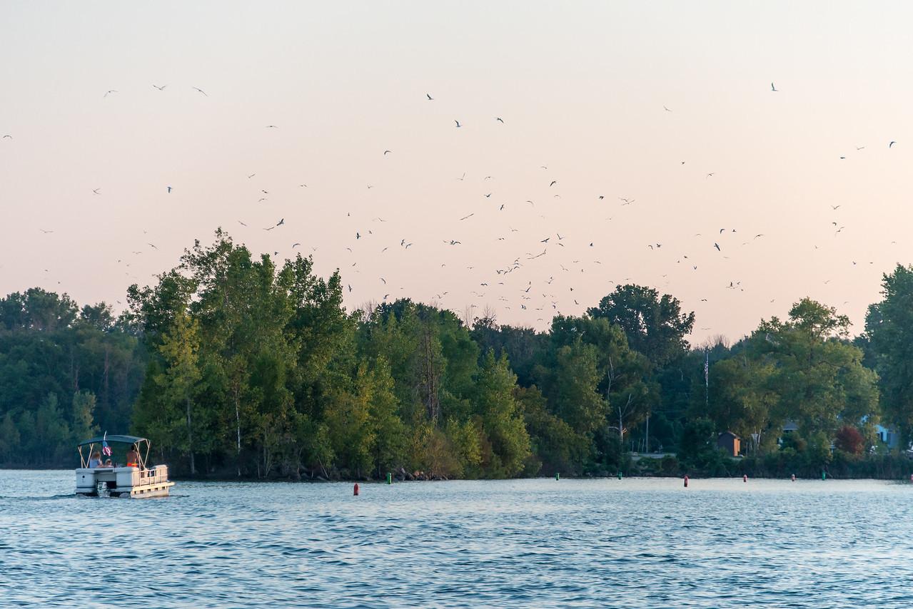 Gulls near the Points - September 2015