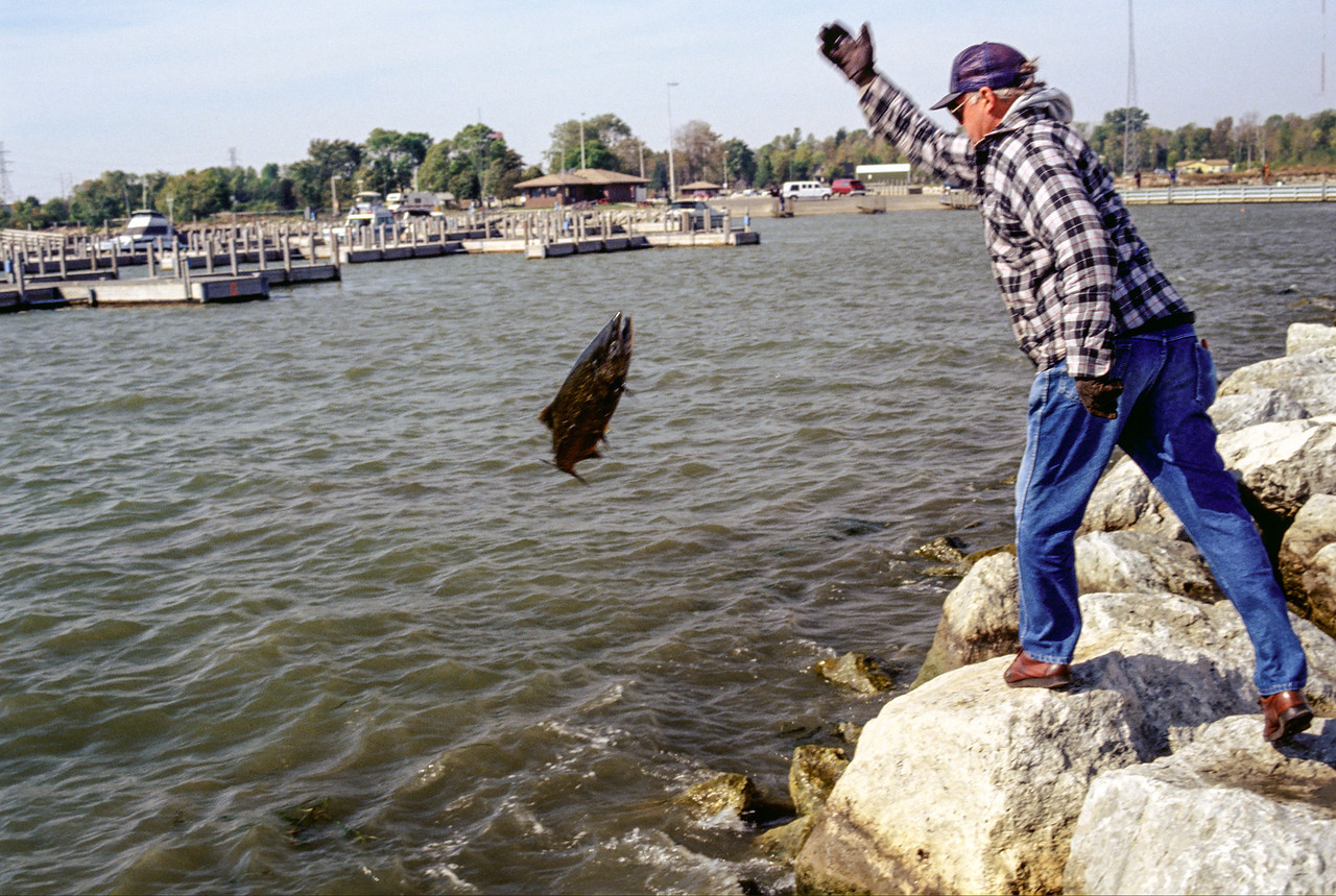 Dad throwing back accidently snagged Salmon at Harbor Beach - October 1991