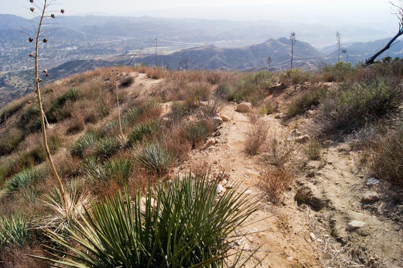 Oak Springs between Yerba Buena and Fascination Springs