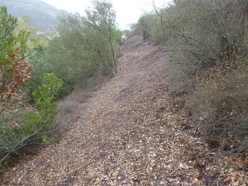 This is what the trail looks like before we start on it. The rangers have cut the brush down for us, now we have to dig it out to make it level. The orange flags show where the downhill edge of the trail will end up.