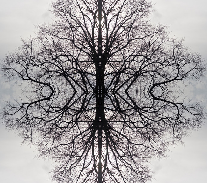 Tree reflection 2