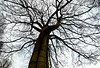 Black Tree 60x50 Black
