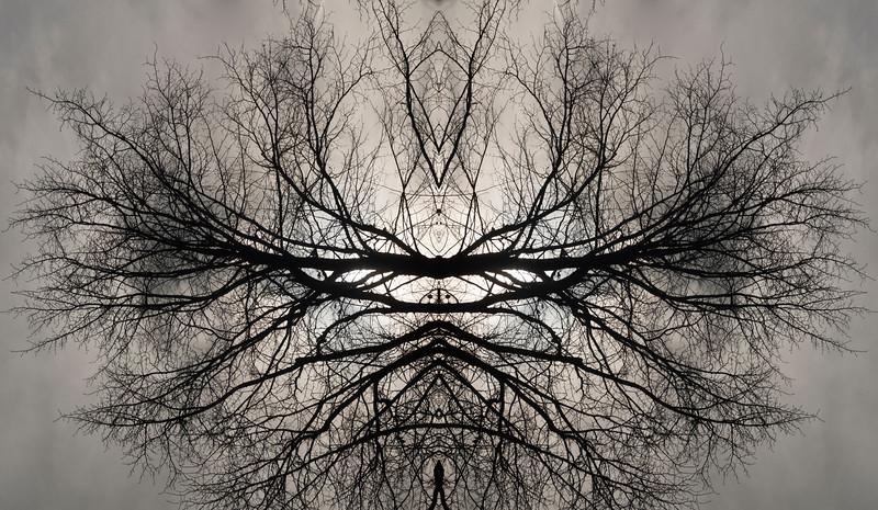 Tree reflection 1