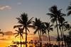 Waikiki Palm Trees Sunset