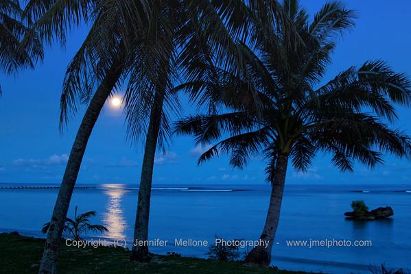 Moonlit Palms before Dawn