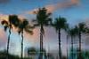 Impressionist Palms