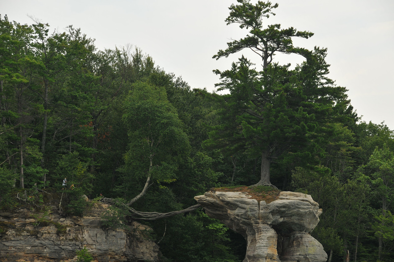Tree surviving by extended root system - Pictured Rocks National Lakeshore - August 2012