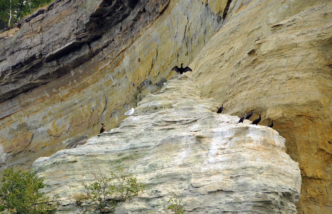 Cormorants at Pictured Rocks National Lakeshore - August 2012
