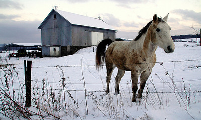 Winter Horse, Plymouth, NY