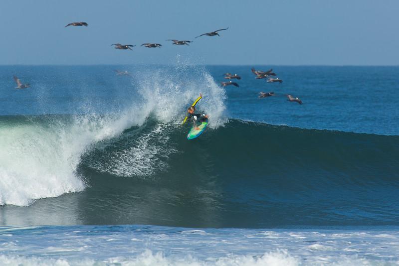 The Jett flying with his flock !  Jett Schilling