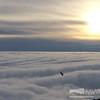 Raven soaring over undercast layer near sunset 8 Dec 2015